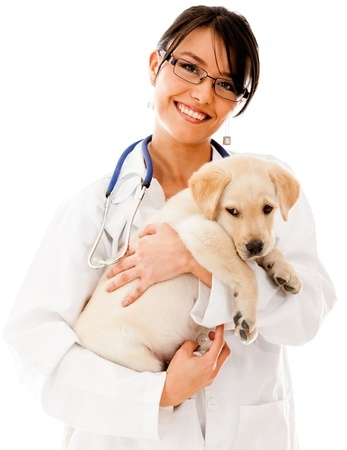 6 Ways to Save Money on Your Pet Medications